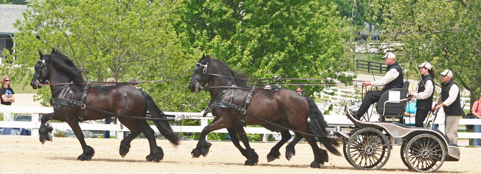 Stonecreek Friesians